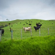 notworkrelated_nz_coromandel_peninsula_16