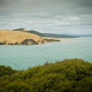 notworkrelated_nz_kauri_coast_01