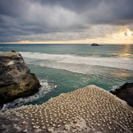 notworkrelated_nz_muriwai_beach_14