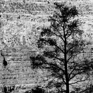 notworkrelated_usa_road_grand_canyon_40