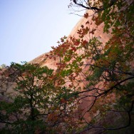 notworkrelated_usa_road_zion_07