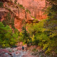 notworkrelated_usa_road_zion_36