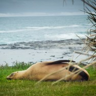 notworkrelated_new_zealand_caitlens_coast_02