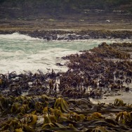 notworkrelated_new_zealand_caitlens_curio_bay_11