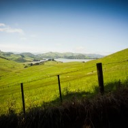 notworkrelated_new_zealand_otago_peninsula_07