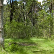 notworkrelated_australia_blue_gum_forest_01