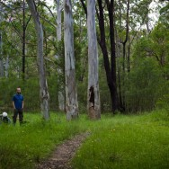 notworkrelated_australia_blue_gum_forest_03