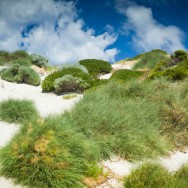 notworkrelated_australia_rottnest_island_03