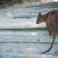 notworkrelated_australia_rottnest_island_07