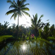 notworkrelated_bali_ubud_20