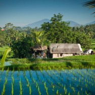notworkrelated_bali_ubud_21