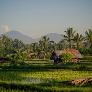 notworkrelated_bali_ubud_23