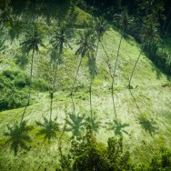notworkrelated_bali_ubud_29