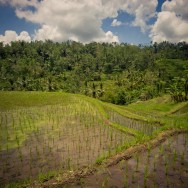 notworkrelated_bali_ubud_munduk_15