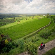 notworkrelated_bali_ubud_munduk_17