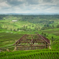 notworkrelated_bali_ubud_munduk_18