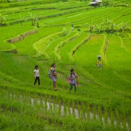notworkrelated_bali_ubud_munduk_19