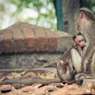 notworkrelated_india_kumily_47