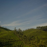 notworkrelated_india_munnar_24