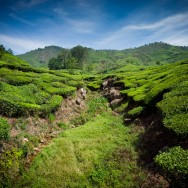 notworkrelated_india_munnar_28
