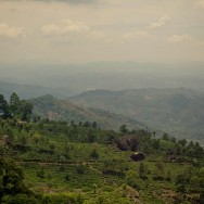 notworkrelated_india_munnar_44
