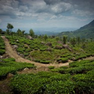 notworkrelated_india_munnar_45