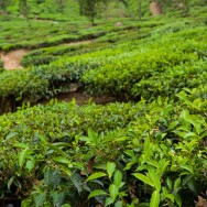 notworkrelated_india_munnar_48