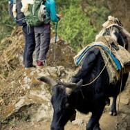notworkrelated_nepal_bupsa_chaurikarka_09