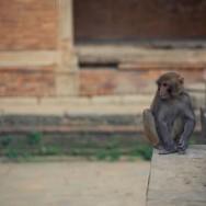 notworkrelated_nepal_kathmandu_40